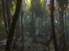 Kelp Forest © Andy Jackson