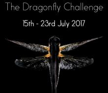 British Dragonfly Week